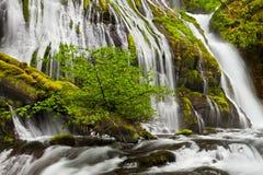 A angra da pantera cai em Washington State imagem de stock royalty free