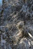 Angra do inverno com a floresta da neve no dia ensolarado gelado Imagem de Stock Royalty Free