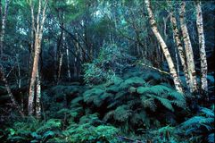 Angra do jubileu na floresta de Knysna Fotografia de Stock Royalty Free