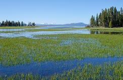 Angra do pelicano, parque nacional de Yellowstone Imagem de Stock