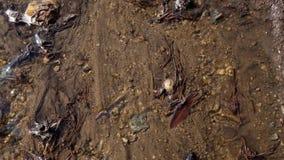 A angra do rastejamento corre através da floresta e flui no rio na mola adiantada vídeos de arquivo