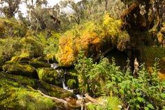 Angra em montanhas do ruwenzori Fotografia de Stock