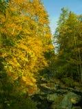 Angra em uma floresta no outono - Baviera imagens de stock