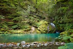 A angra está vindo em uma calha do lago pequeno a cachoeira pequena com lote das árvores e tipo diferente das plantas com folha imagem de stock