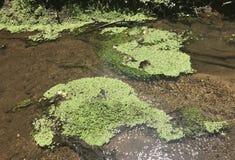 Angra Moss Pad Fotos de Stock