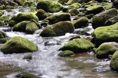 Angra Mossy Fotografia de Stock