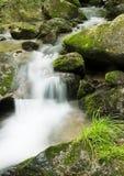 Angra na floresta Fotografia de Stock Royalty Free