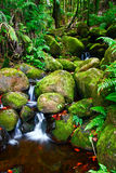 Angra na selva de Havaí Imagem de Stock Royalty Free