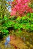 Angra no jardim e em uma árvore de florescência Imagens de Stock Royalty Free