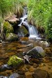 Angra pantanosa Fotos de Stock Royalty Free