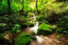 Angra pequena em uma floresta musgoso Imagens de Stock