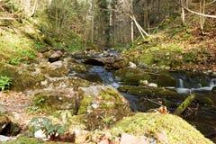 Angra pequena na floresta Imagem de Stock