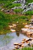 Angra pequena no prado Imagem de Stock Royalty Free