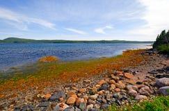 Angra protegida do oceano no verão Imagens de Stock