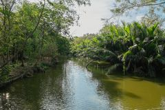 Angra que corre através do bosque luxúria da palma de Nipa no golpe Krachao, Tailândia foto de stock royalty free