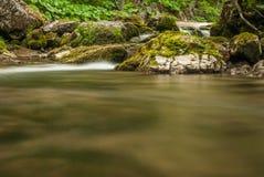 Angra, rochas e vegetação Imagem de Stock Royalty Free