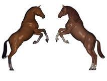 Angreifende Pferde Stockfoto