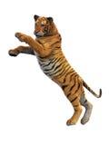 Angreifender Tiger, wildes Tier auf weißem Hintergrund Stockbilder
