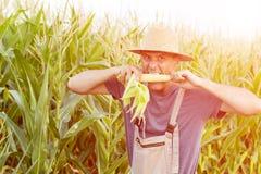 Angru farmer at corn maize field. Stock Photography