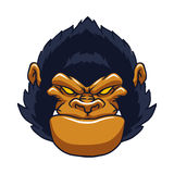 Angry ape gorilla face Royalty Free Stock Photography