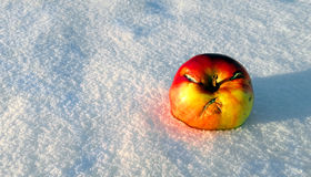 Angry Apple. On the snow Royalty Free Stock Photos