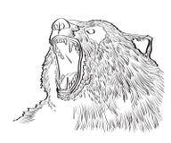 Angry bear Royalty Free Stock Image