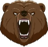 Angry bear head mascot Royalty Free Stock Image