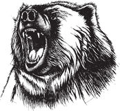 Angry Bear Royalty Free Stock Photos