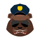 Angry bear in police cap. Aggressive Grizzly head. Wild animal m Stock Photos
