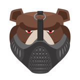 Angry bear in protective mask. Aggressive Grizzly head. Wild ani Stock Images