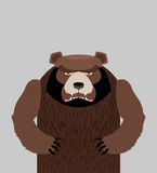 Angry bear standing Stock Images