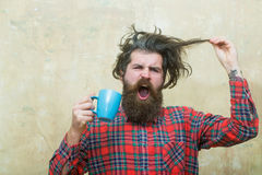 Angry bearded man holding fringe hair and blue cup stock photo