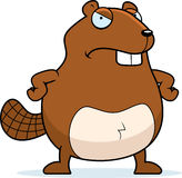Angry Beaver Royalty Free Stock Photography