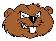 Angry beaver. Cartoon illustration of an angry beaver Stock Photos