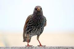 Angry bird Stock Photo