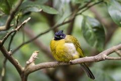 Angry bird in Hong Kong Park Royalty Free Stock Photo