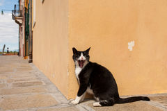 Angry Black cat. In Burano, Venice royalty free stock image