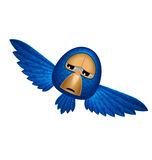 Angry blue bird soars and looks to you Stock Photo