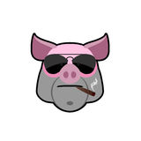 Angry boar. Pig head with glasses and a cigarette. Animal farm i Royalty Free Stock Photo