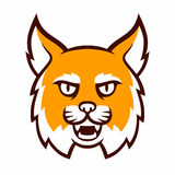 Angry bobcat mascot head. Angry cartoon bobcat mascot head. Comic style wildcat illustration Royalty Free Stock Photo