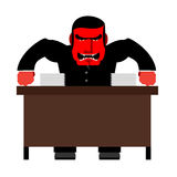 Angry boss. Chief Red with anger at  table. Head of swears and s Stock Image