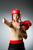 Angry boxer against Royalty Free Stock Photo