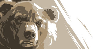 Angry brown bear. Angry bear on a white background abstract Stock Images
