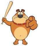 Angry Brown Bulldog Cartoon Mascot Character Holding A Bat And Pointing Royalty Free Stock Photo