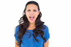 Angry brunette shouting at camera Royalty Free Stock Image