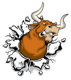 Angry Bull Stock Image
