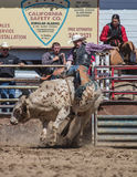Angry Bull. A bull rider takes a ride Royalty Free Stock Photo