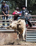 Angry Bull. A bull rider takes a ride Royalty Free Stock Image