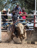 Angry Bull. A bull rider takes a ride Royalty Free Stock Photos