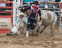 Angry Bull. A rodeo clown runs from a  bull in the rodeo. The rodeo in Cottonwood, California is a popular event on Mother's Day weekend in this small northern Stock Photo